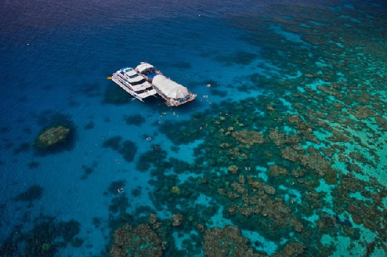 Visit The Reef