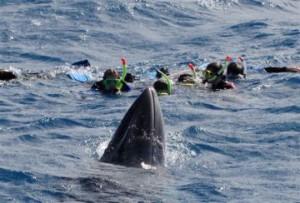 Minke Whale season