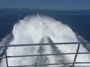 Wavepiercer Cruise Boat