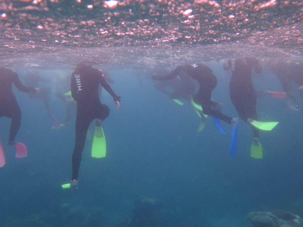 Group Of Snorkellers On The Great Australian Barrier Reef