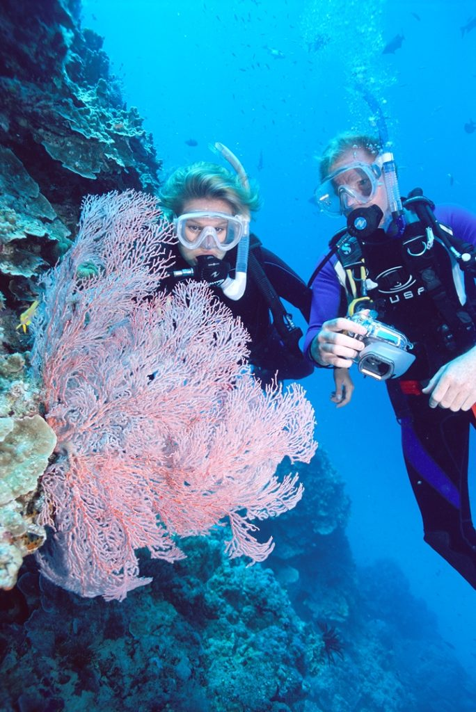 Great Barrier Reef Diving From Cairns Tropical North Queensland