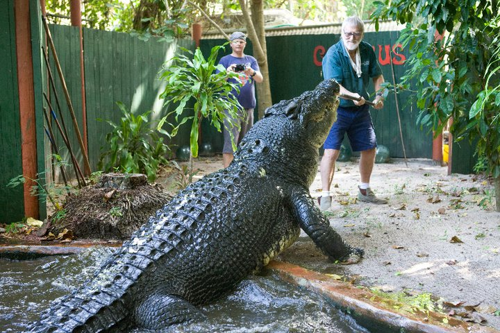 The World's Biggest Captive Crocodile!