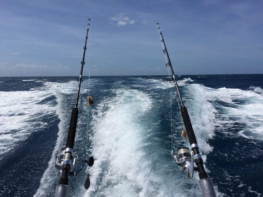 cairns reef fishing charter