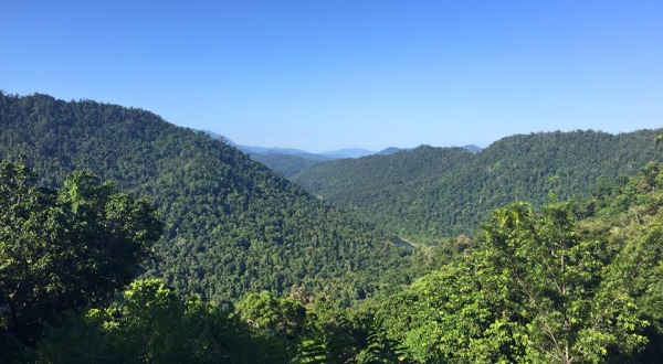 rainforest-view-from-mamu-skywal-27121_600x330