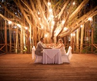 Weddings and Special Occasions at Palm Cove