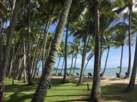 Relax under the palm trees at Palm Cove