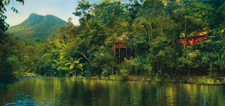 3 Night Daintree Rainforest Luxury Treehouse with Gourmet Breakfast Daily