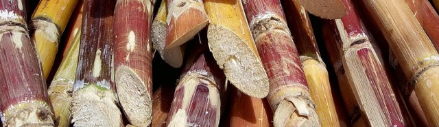 Sugar Cane stacked