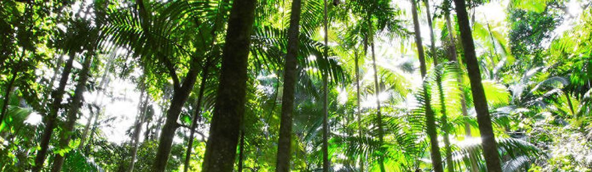 1 Day 4WD Daintree Rainforest Adventure Small Group Only