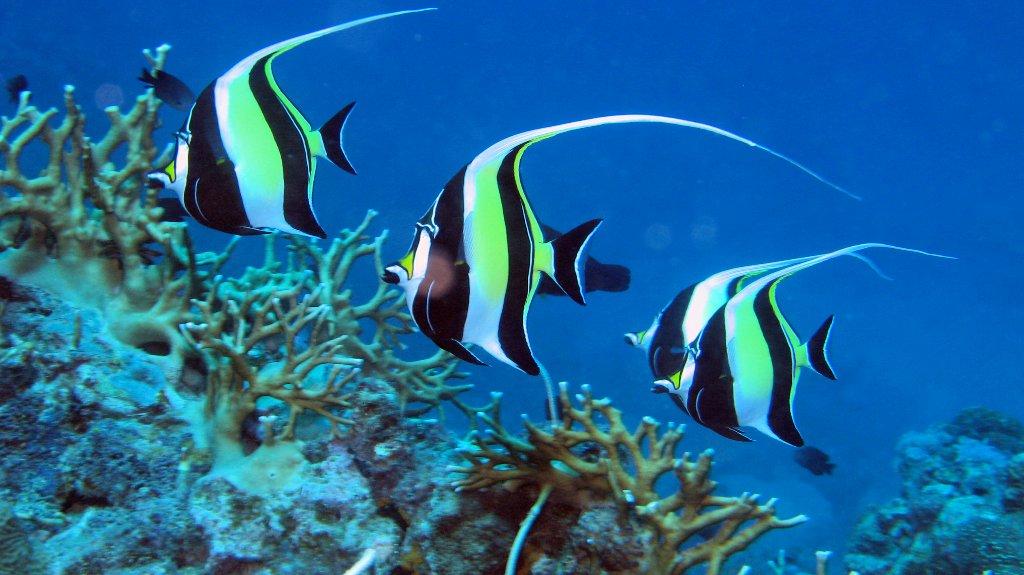 Port douglas snorkel tour great barrier reef luxury reef for Great barrier reef fish