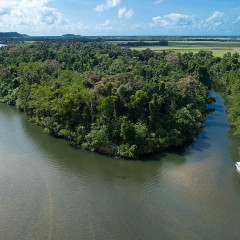 1 Hour Daintree River Cruise