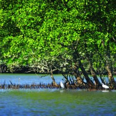 2 Day 1 Night Cooktown Daintree National Park Tour