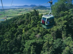 2 Day Combo Reef & Rainforest | Includes Skyrail Rainforest Cableway