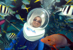 2 Day Family Combo Package | Helmet Diving On The Great Barrier Reef Australia