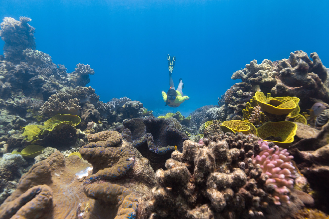 Reef Tours From Mackay