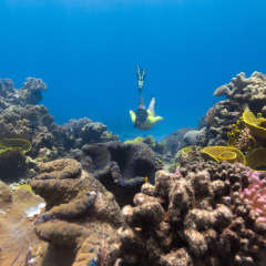 2 Great Barrier Reef Locations In Half Day Reef Trip