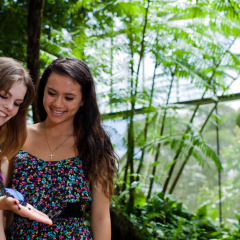 2 Hours Free Time In Kuranda | Visit The Butterfly Sanctuary