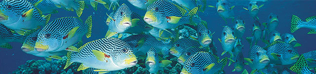 School of Fish on the Great Barrier Reef