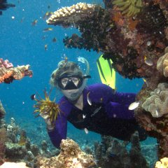 Snorkeller Swimming in Coral on the Great Barrier Reef