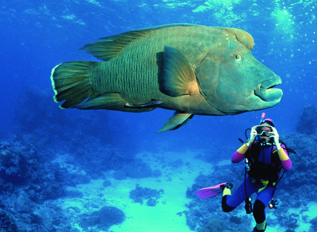 Great barrier reef tours scuba diving for Great barrier reef fish