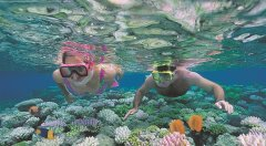4 Night Palm Cove Reef & Rainforest Package