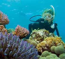 Port Douglas Great Barrier Reef Tours by The Tour Specialists