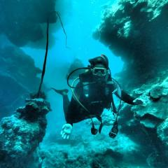 9 to 10 dives at Holmes Reef, including a night dive on the Great Barrier Reef