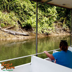 A bit of crocodile spotting onthe mighty Daintree River in Cape Tribulation