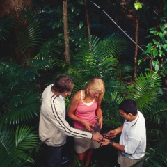 Aboriginal rainforest medicines in the Daintree Rainforest
