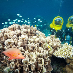 Admire the coral up close on your Scuba Doo Great Barrier Reef tour