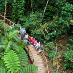 Aerial view of guests on Daintree Rainforest tour