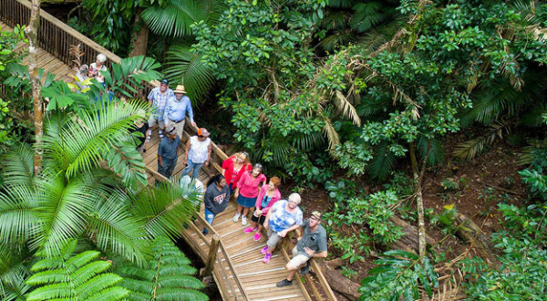 Daintree Rainforest Tours - Aerial view of guests on Daintree Rainforest tour