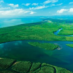 Aerial view of the Daintree Rainforest