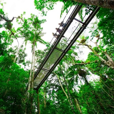 Aerial Walkway Daintree Rainforest - Daintree Discovery Centre