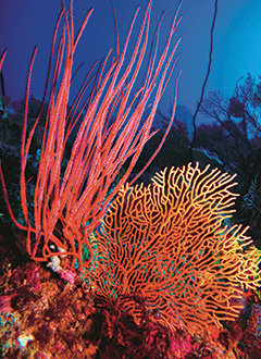 Agincourt Reef Ribbon Reef | Dive & Snorkel Port Douglas