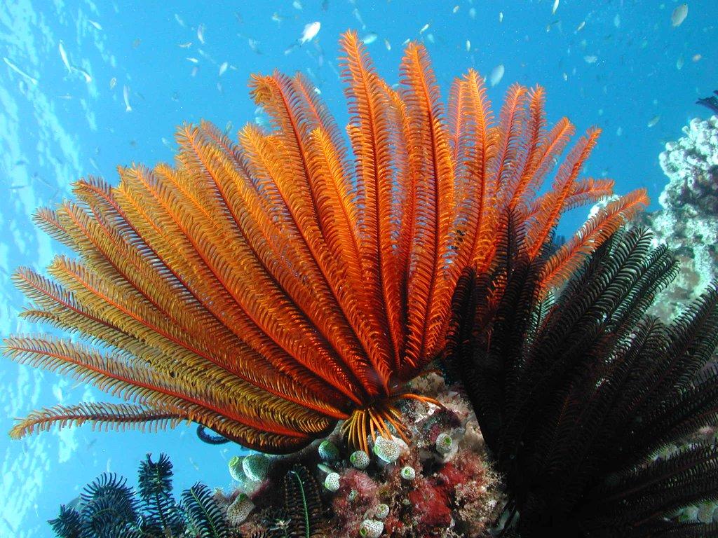 Diving Cairns Scuba Diving Liveaboard Trips   5 Star luxury   3-4-7 ...