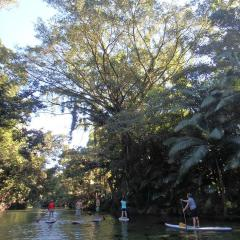 Mossman River | Afternoon Stand Up Paddle Boarding Tour