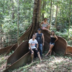 Amazing Tree in the Rainforest Seen on Hummer ATV Tour on the Atherton Tablelands behind Cairns