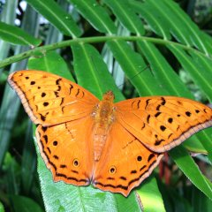 There Are More Than 2,000 Butterflies At The Australian Butterfly Sanctuary | Coach Day Trip To Kuranda From Cairns