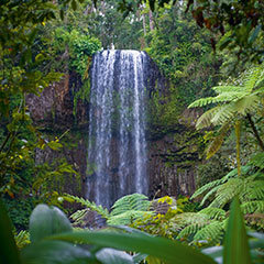 Atherton Tablelands has many waterfalls where you can swim