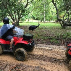 Kuranda ATV Rainforest Tours Cairns