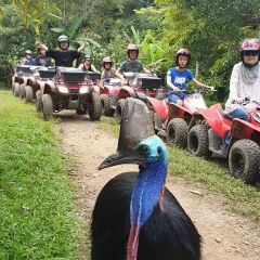 ATV Rainforest Tours Kuranda