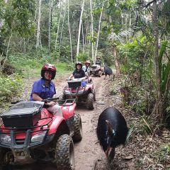 Quad Bike ATV Rainforest Tours Kuranda