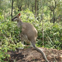 Australian Outback Wildlife | Chillagoe Caves & Undara Lava Tubes In 1 Day