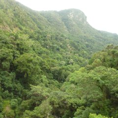 Best Value Kuranda Day Tour Rainforest Views
