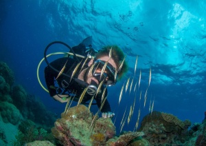 Best Value Snorkel & Dive Tours In Cairns