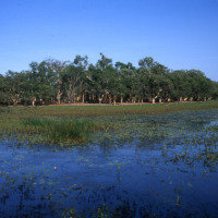 Billabong wetlands - Cairns to Cape York 4WD Tour