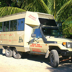 Daintree Rainforest tours are great for wedding groups in Port Douglas