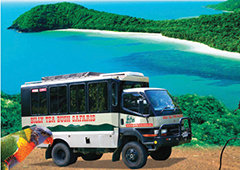 Rainforest Tours Cairns & Bush Safaris Daintree & Cape Tribulation
