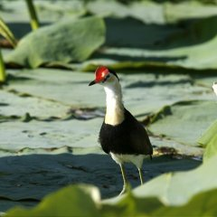 Bird spotting tours in Cairns